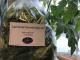 Fresh lettuce at Sigrid's in Kingston
